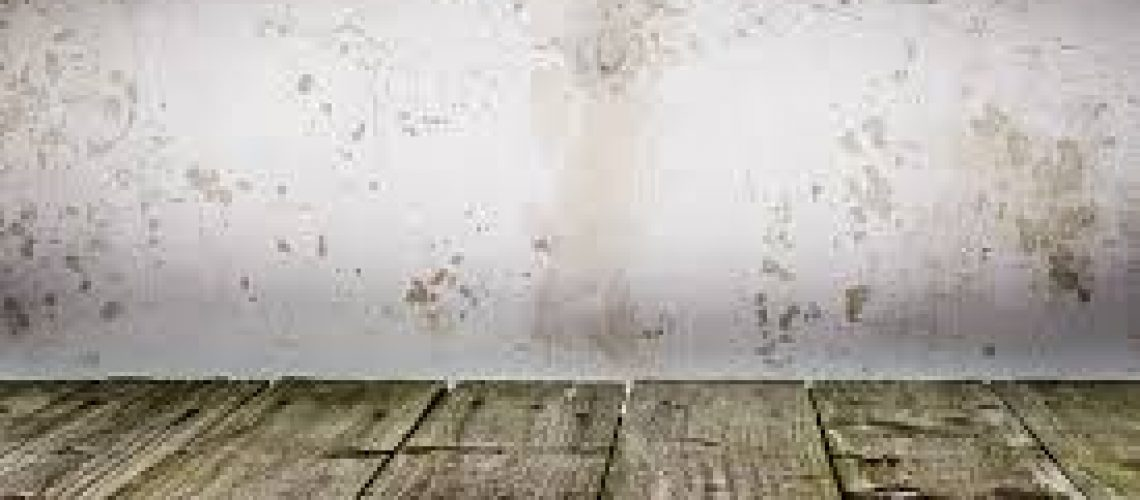 Mold prevention